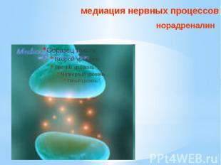 медиация нервных процессов норадреналин