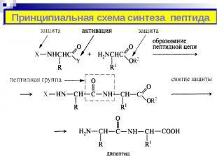 Принципиальная схема синтеза пептида