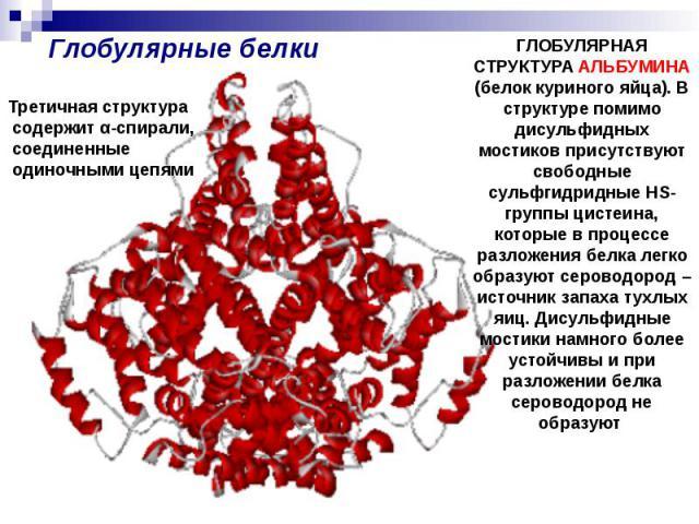 Глобулярные белки