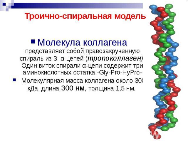 Молекула коллагена представляет собой правозакрученную спираль из 3 α-цепей (тропоколлаген). Один виток спирали α-цепи содержит три аминокислотных остатка -Gly-Pro-HyPro- Молекула коллагена представляет собой правозакрученную спираль из 3 α-цепей (т…