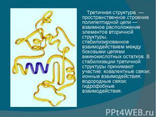 Третичная структура — пространственное строение полипептидной цепи — взаимное ра