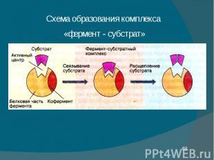 Схема образования комплекса Схема образования комплекса «фермент - субстрат»