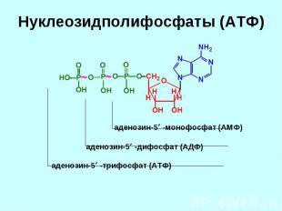аденозин-5 -монофосфат (АМФ) аденозин-5 -дифосфат (АДФ) аденозин-5 -трифосфат (А