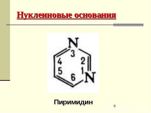 Нуклеиновые основания