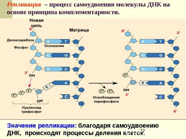 Репликация – процесс самоудвоения молекулы ДНК на основе принципа комплементарности.