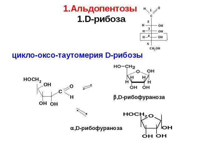 цикло-оксо-таутомерия D-рибозы цикло-оксо-таутомерия D-рибозы ,D-рибофураноза ,D-рибофураноза