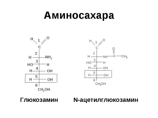 Глюкозамин N-ацетилглюкозамин Глюкозамин N-ацетилглюкозамин