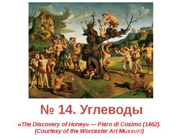 № 14. Углеводы «The Discovery of Honey» — Piero di Cosimo (1462). (Courtesy of the Worcester Art Museum)