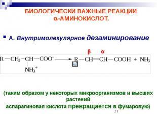 БИОЛОГИЧЕСКИ ВАЖНЫЕ РЕАКЦИИ -АМИНОКИСЛОТ. А. Внутримолекулярное дезаминирование