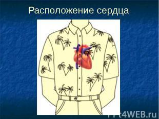 Расположение сердца