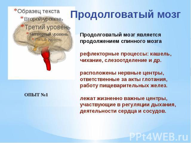 Продолговатый мозг является продолжением спинного мозга рефлекторные процессы: кашель, чихание, слезоотделение и др. расположены нервные центры, ответственные за акты глотания, работу пищеварительных желез. лежат жизненно важные центры, участвующие …