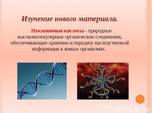 Изучение нового материала. Нуклеиновые кислоты - природные высокомолекулярные ор