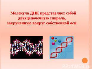 Молекула ДНК представляет собой двухцепочечную спираль, закрученную вокруг собст