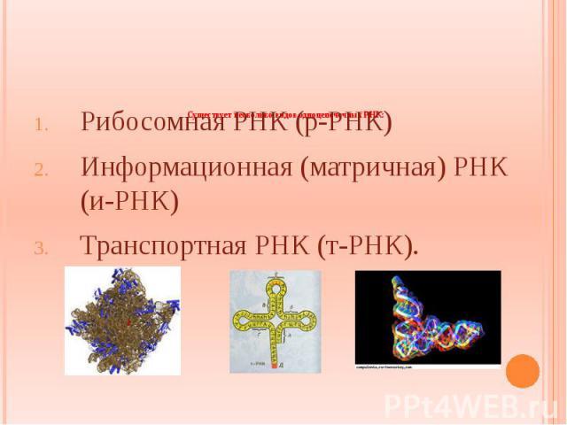 Существует несколько видов одноцепочечных РНК: Рибосомная РНК (р-РНК) Информационная (матричная) РНК (и-РНК) Транспортная РНК (т-РНК).