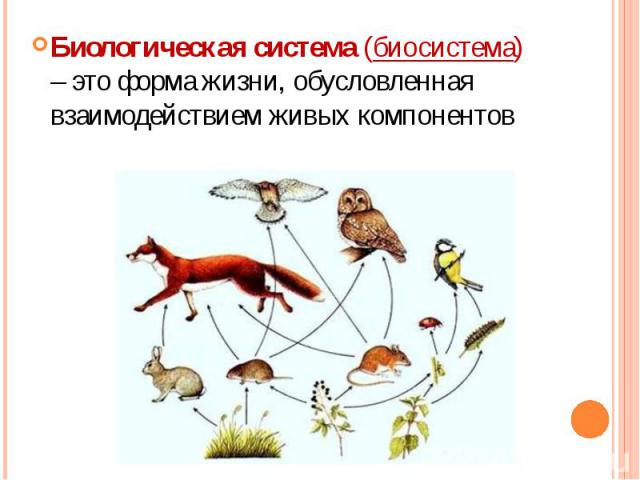 Биологическая система (биосистема) – это форма жизни, обусловленная взаимодействием живых компонентов Биологическая система (биосистема) – это форма жизни, обусловленная взаимодействием живых компонентов