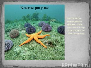 Морские звезды - очень подвижные животные, но они умеют только быстро ползать по