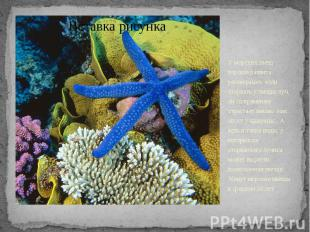У морских звезд хорошо развита регенерация: если оторвать у звезды луч, он со вр