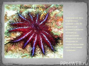 Среди морских звёзд встречаются и ядовитые особи. Их яд опасен для человека.Если