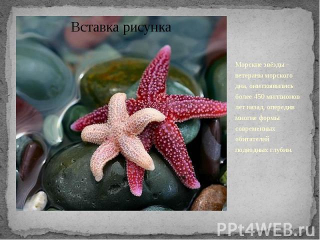 Морские звёзды – ветераны морского дна, они появились более 450 миллионов лет назад, опередив многие формы современных обитателей подводных глубин.