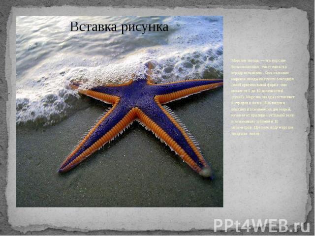 Морские звезды — это морские беспозвоночные, относящиеся к отряду иглокожих. Свое название морские звезды получили благодаря своей оригинальной форме: они имеют от 5 до 40 конечностей (лучей). Морские звезды составляют 8 отрядов и более 1500 видов и…