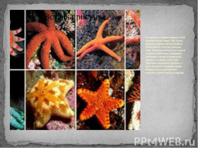 Исследователи созданного недавно в КНДР фармацевтического завода «Оир» нашли применение морским звездам, которые в избытке водятся в Желтом и Японском морях. Им удалось извлечь из этих существ полезные составляющие, оказывающие благотворное влияние …