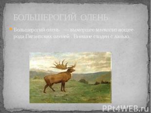 БОЛЬШЕРОГИЙ ОЛЕНЬ Большерогий олень — вымершее млекопитающее рода Гигантских оле