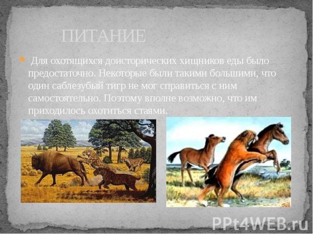 ПИТАНИЕ Для охотящихся доисторических хищников еды было предостаточно. Некоторые были такими большими, что один саблезубый тигр не мог справиться с ним самостоятельно. Поэтому вполне возможно, что им приходилось охотиться стаями.