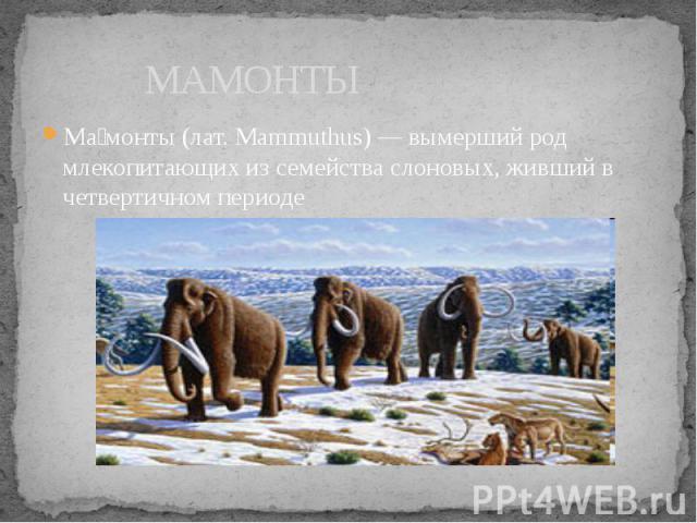 МАМОНТЫ Ма монты (лат. Mammuthus) — вымерший род млекопитающих из семейства слоновых, живший в четвертичном периоде