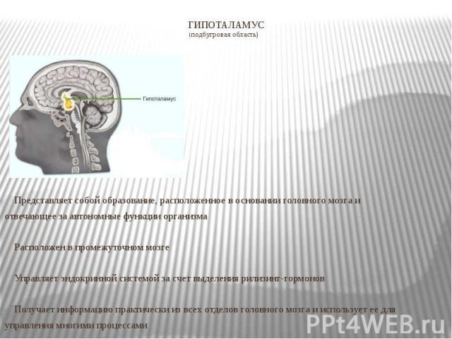 ГИПОТАЛАМУС (подбугровая область) Представляет собой образование, расположенное в основании головного мозга и отвечающее за автономные функции организма Расположен в промежуточном мозге Управляет эндокринной системой за счет выделения рилизинг-гормо…
