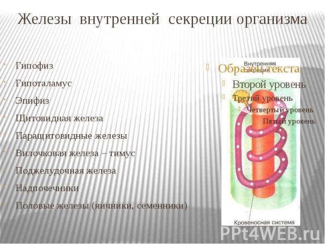 Железы внутренней секреции организма Гипофиз Гипоталамус Эпифиз Щитовидная железа Паращитовидные железы Вилочковая железа – тимус Поджелудочная железа Надпочечники Половые железы (яичники, семенники)