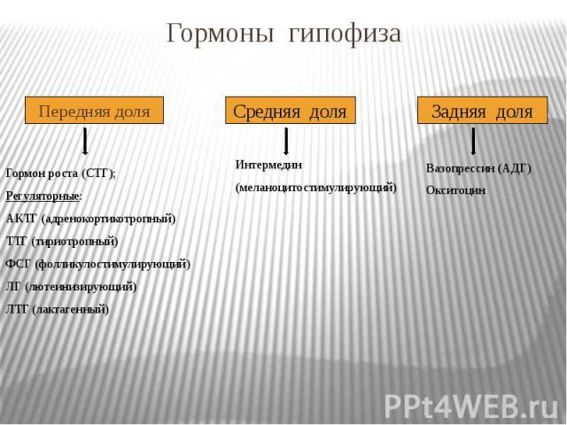 Гормоны гипофиза Передняя доля