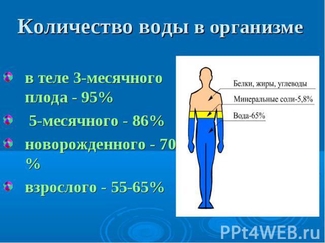 в теле 3-месячного плода - 95% в теле 3-месячного плода - 95% 5-месячного - 86% новорожденного - 70 % взрослого - 55-65%