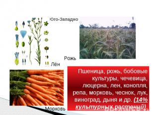 Юго-Западно - азиатский Пшеница, рожь, бобовые культуры, чечевица, люцерна, лен,