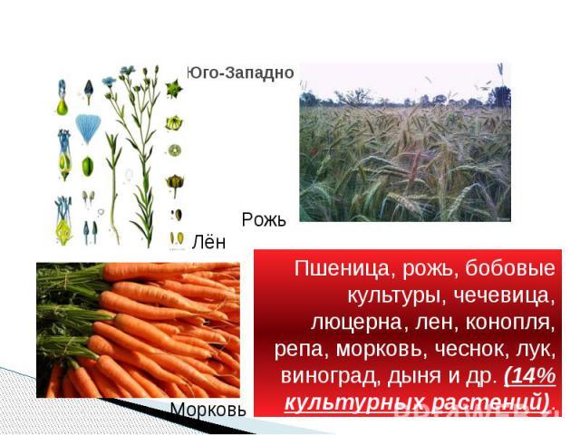 Юго-Западно - азиатский Пшеница, рожь, бобовые культуры, чечевица, люцерна, лен, конопля, репа, морковь, чеснок, лук, виноград, дыня и др. (14% культурных растений).