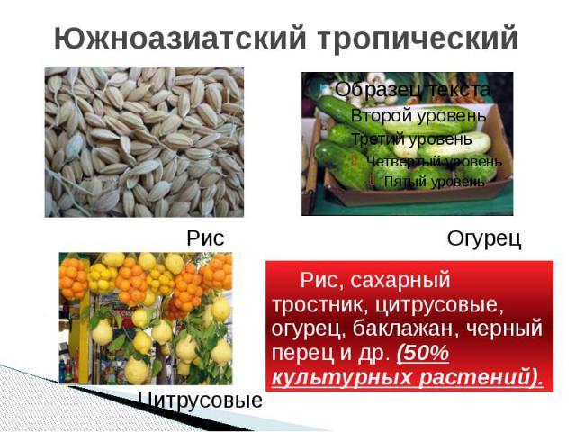 Южноазиатский тропический Рис, сахарный тростник, цитрусовые, огурец, баклажан, черный перец и др. (50% культурных растений).
