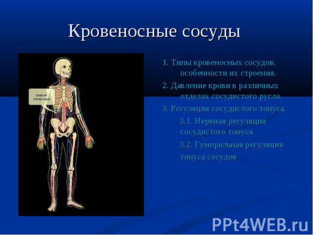 1. Типы кровеносных сосудов, особенности их строения. 1. Типы кровеносных сосудов, особенности их строения. 2. Давление крови в различных отделах сосудистого русла. 3. Регуляция сосудистого тонуса. 3.1. Нервная регуляция сосудистого тонуса 3.2. Гумо…