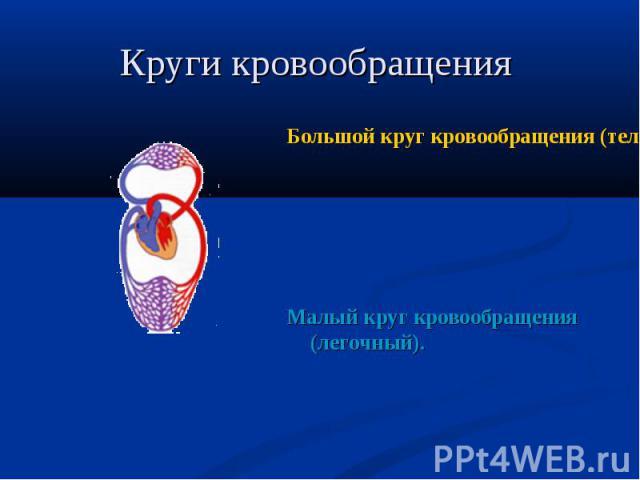 Большой круг кровообращения (телесный) Большой круг кровообращения (телесный) Малый круг кровообращения (легочный).