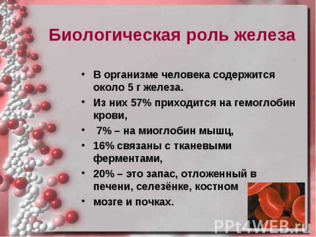 Биологическая роль железа Биологическая роль железа