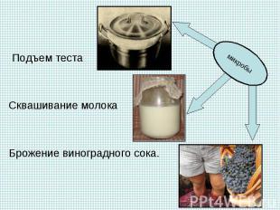 Подъем теста Подъем теста Сквашивание молока Брожение виноградного сока.