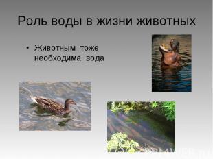 Роль воды в жизни животных Животным тоже необходима вода