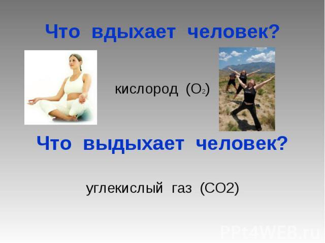 Что вдыхает человек? кислород (О2) Что выдыхает человек? углекислый газ (СО2)