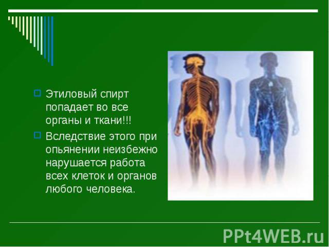 Этиловый спирт попадает во все органы и ткани!!! Этиловый спирт попадает во все органы и ткани!!! Вследствие этого при опьянении неизбежно нарушается работа всех клеток и органов любого человека.