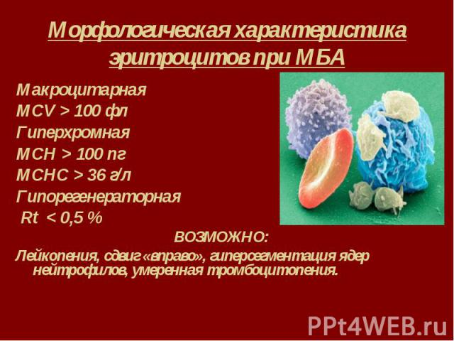 Морфологическая характеристика эритроцитов при МБА Макроцитарная MCV > 100 фл Гиперхромная MCH > 100 пг MCHC > 36 г/л Гипорегенераторная Rt < 0,5 % ВОЗМОЖНО: Лейкопения, сдвиг «вправо», гиперсегментация ядер нейтрофилов, умеренная тромбо…