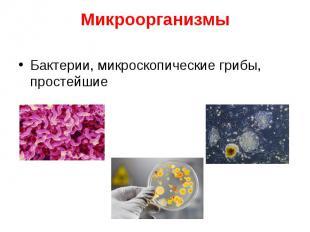 Бактерии, микроскопические грибы, простейшие Бактерии, микроскопические грибы, п