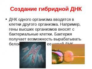 ДНК одного организма вводятся в клетки другого организма. Например, гены высших