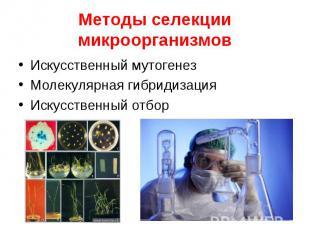 Искусственный мутогенез Искусственный мутогенез Молекулярная гибридизация Искусс