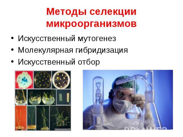 Искусственный мутогенез Искусственный мутогенез Молекулярная гибридизация Искусственный отбор