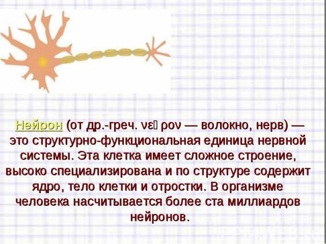 Нейрон(отдр.-греч. νεῦρον— волокно, нерв)— это структурно-функциональная единицанервной системы. Эта клетка имеет сложное строение, высоко специализирована и по структуре содержит ядро, тело клетки и отростки. В организ…