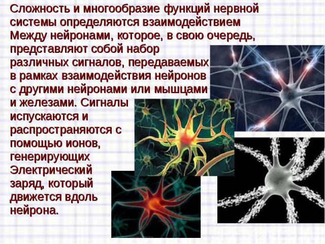 Сложность и многообразие функцийнервной Сложность и многообразие функцийнервной системыопределяются взаимодействием Между нейронами, которое, в свою очередь, представляют собой набор различных сигналов, передаваемых в рамках взаимо…