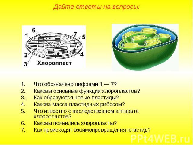 Что обозначено цифрами 1 — 7? Что обозначено цифрами 1 — 7? Каковы основные функции хлоропластов? Как образуются новые пластиды? Какова масса пластидных рибосом? Что известно о наследственном аппарате хлоропластов? Каковы появились хлоропласты? Как …